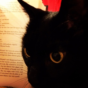cat, book, reading, read
